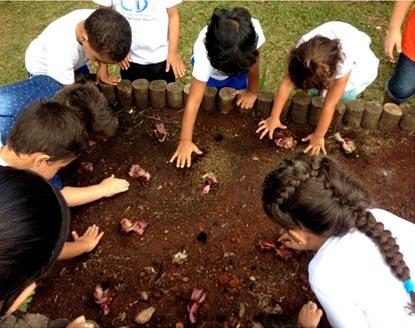 Projeto Horta – Plantar e colher... O que vamos aprender
